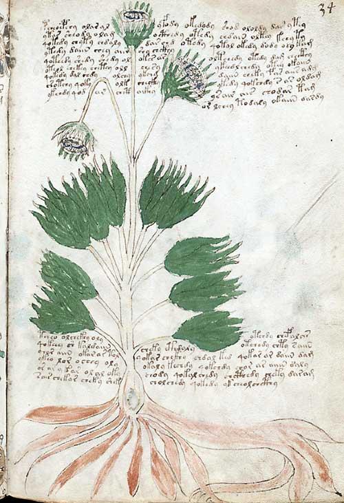 foto del manuscrito voygnich que es útil ilustrar la idea de la salud de las plantas como un todo